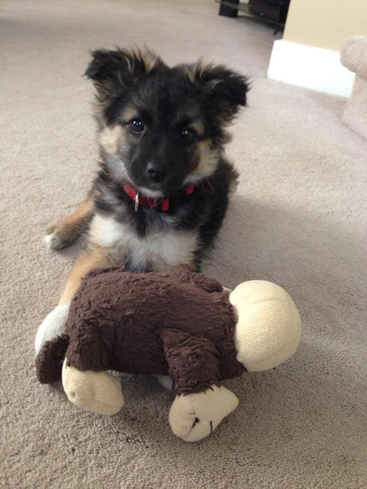 Timbit is male puppy looking for a home.