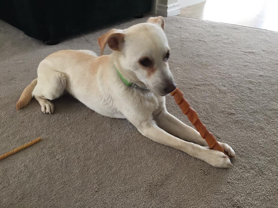 Casper chews stick
