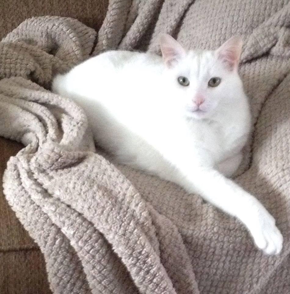 Kobe must remain an indoor cat.