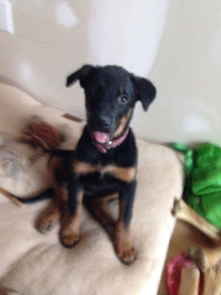 Roxy, AKA Miss Shenzy, has a sweet temperament.