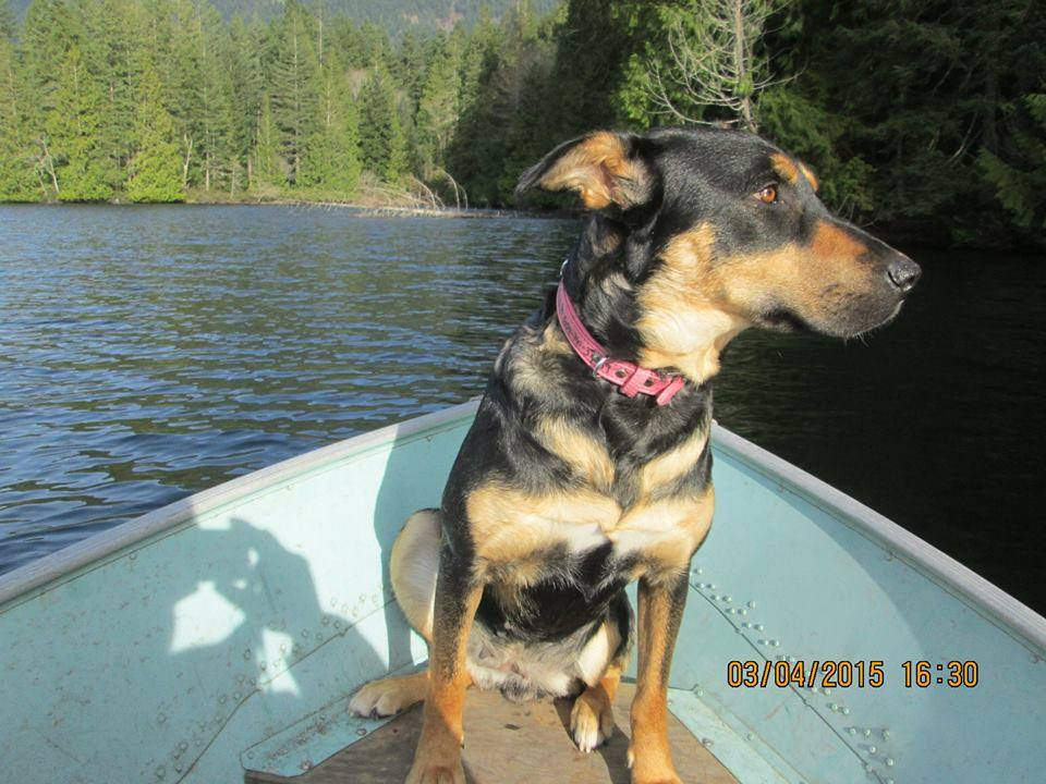 Stella, AKA Gaga, looks pretty comfortable in a boat.