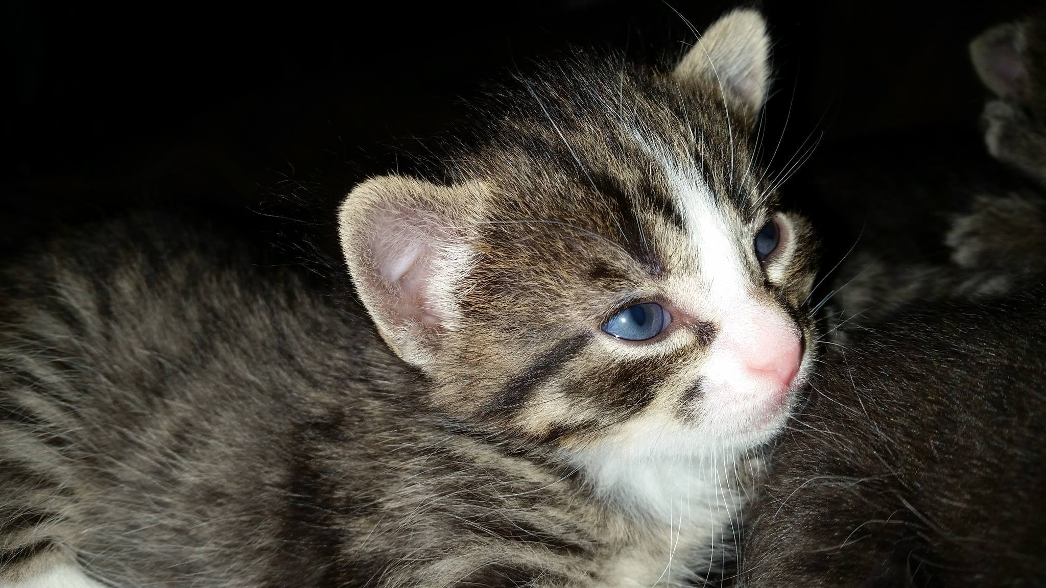 Vida is a female kitten looking for a home.