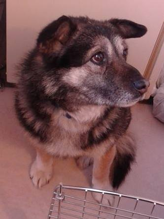 Randy is a year-old unneutered male looking for his fur-ever home.