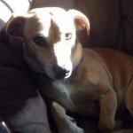 Nello is a 2-3 year old terrier cross.
