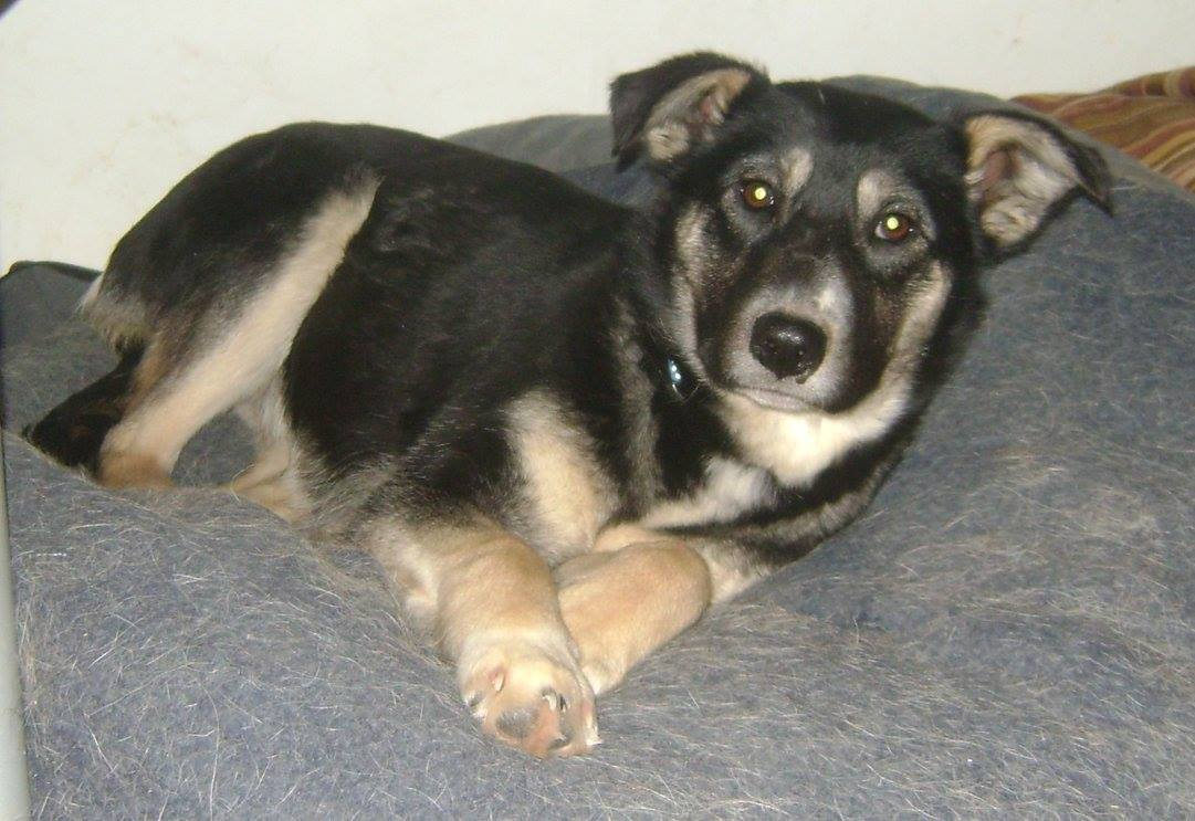 Princess Paisley is a one-year-old, medium sized female.