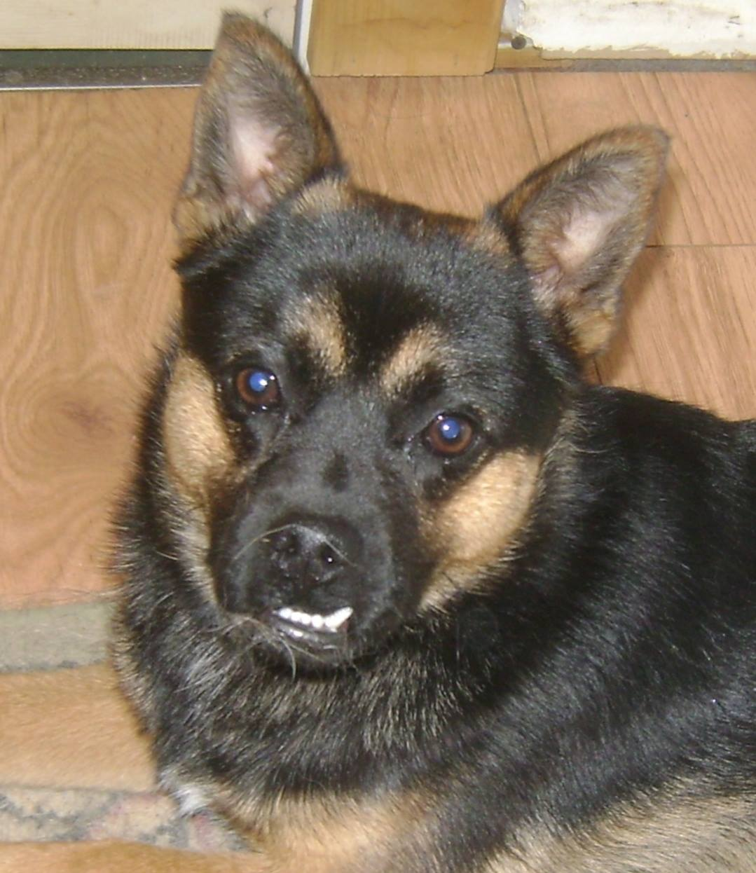 Neeko is a year-old male dog looking for a home.