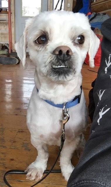 Mr. Howls is small-breed and about 2-years-old. He loves kids and cuddles.