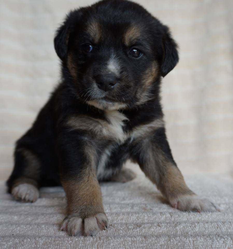 Ariel is a female, small breed puppy from YARN's Disney Princess litter.