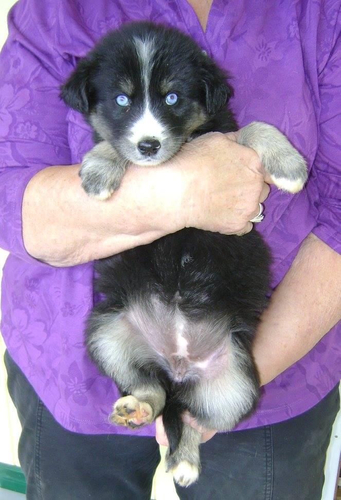 Betty Lou is a female puppy from YARN's Sesame Street Litter.