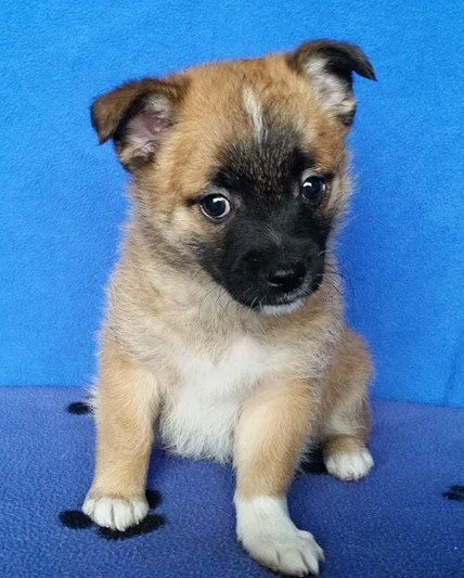 Em is a female, small-breed puppy.