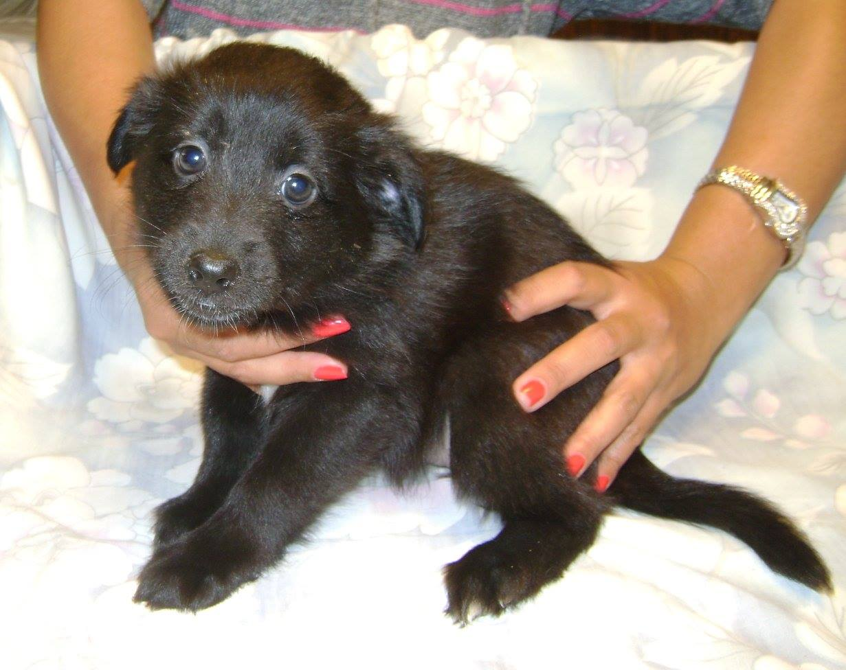 Pudding is a female, small-breed puppy.