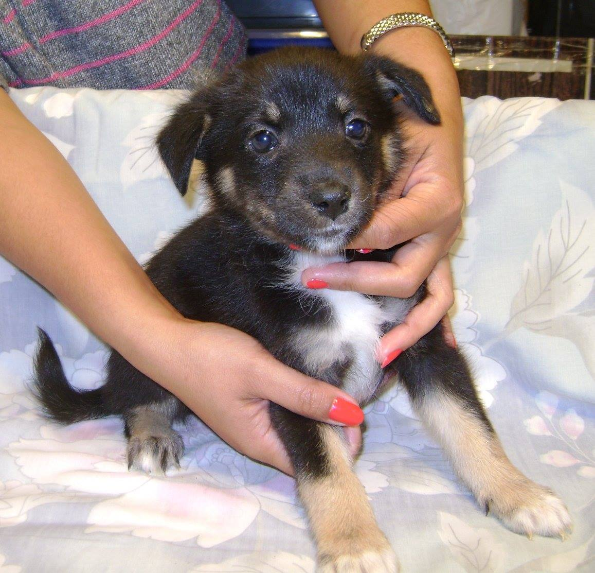 Strudel is a male, small-breed puppy.