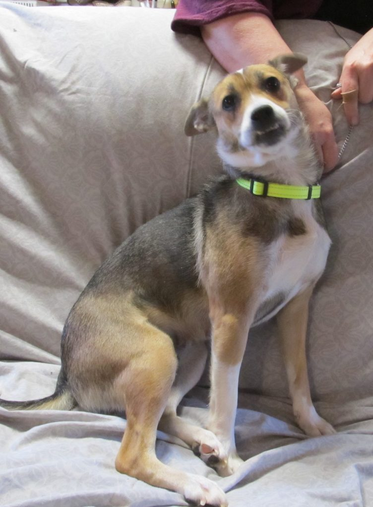 Bella is a small dog who needs a home.