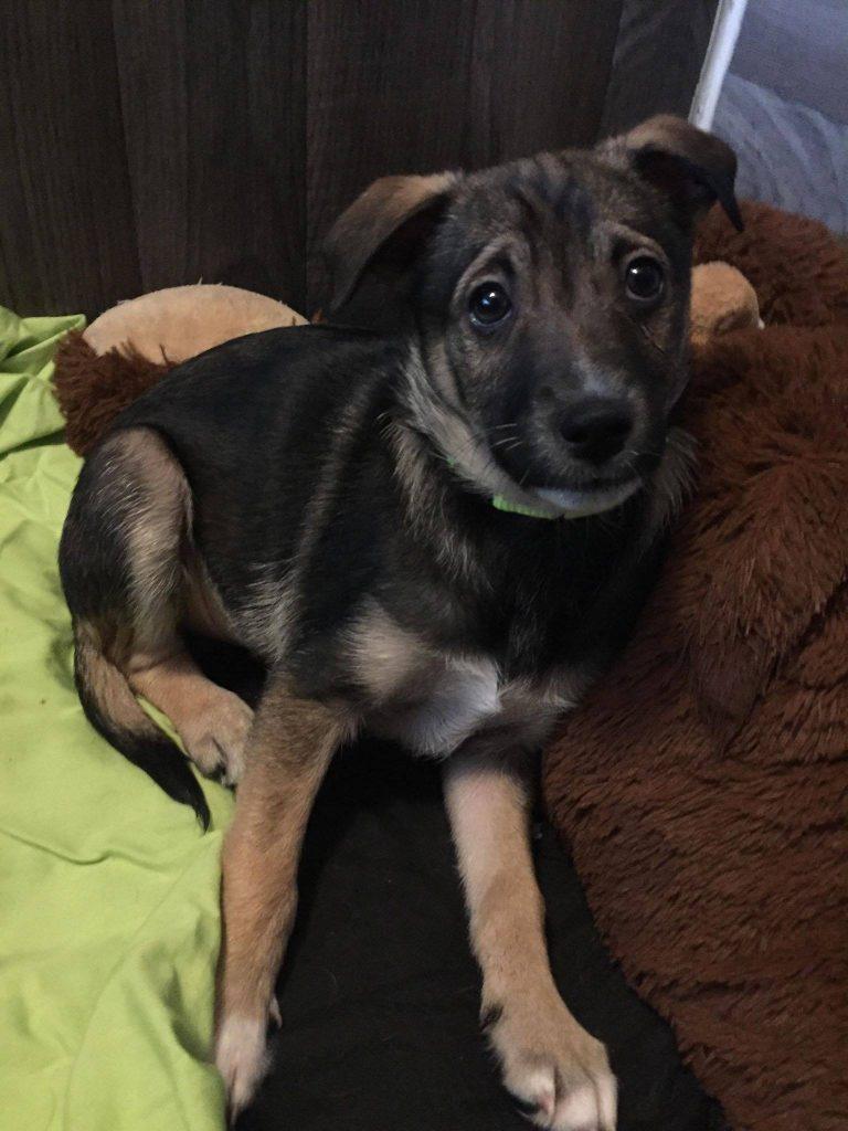 Larry is a male terrier cross.