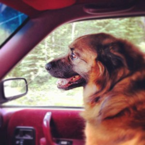 Floyd is an 8-year-old male looking for his fur-ever home.